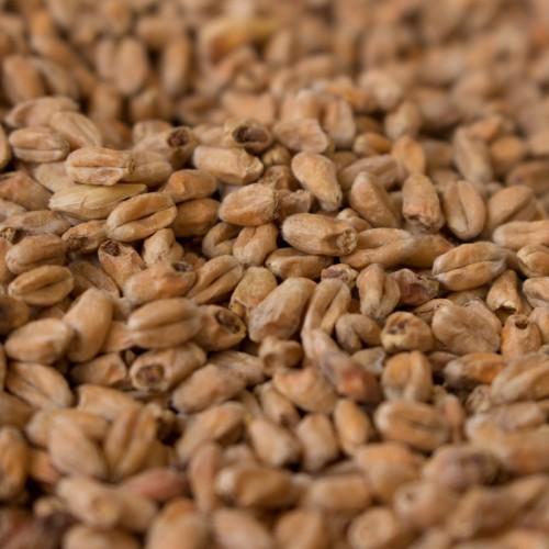 Carawheat